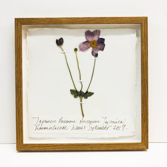 Japanese Anemone Original by Peta King | 9 x 9 Pressing Framed