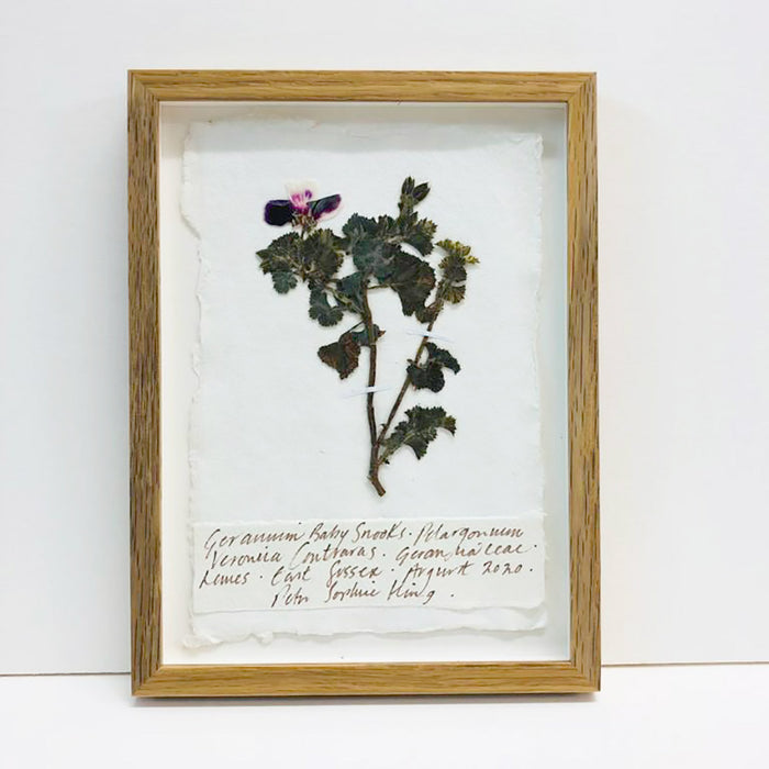 Geranium, Baby Snooks II Original by Peta King | A5 Pressing Framed