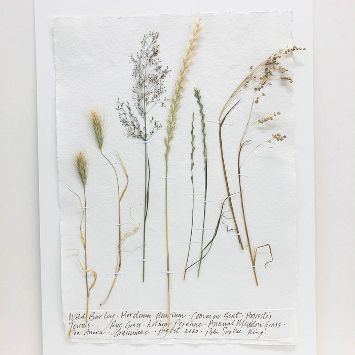 Meadow Grasses IIII Original by Peta King | A3 Pressing