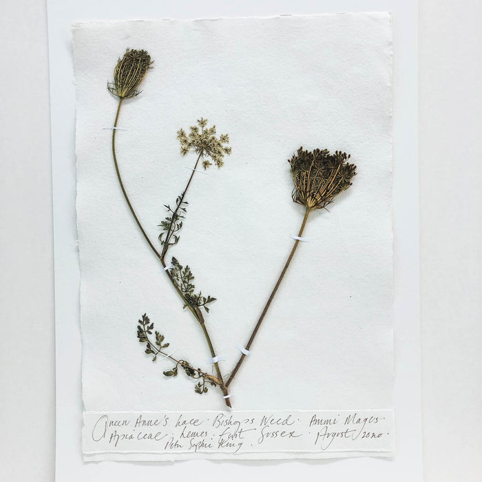 Queen Anne's Lace Original by Peta King | A3 Pressing