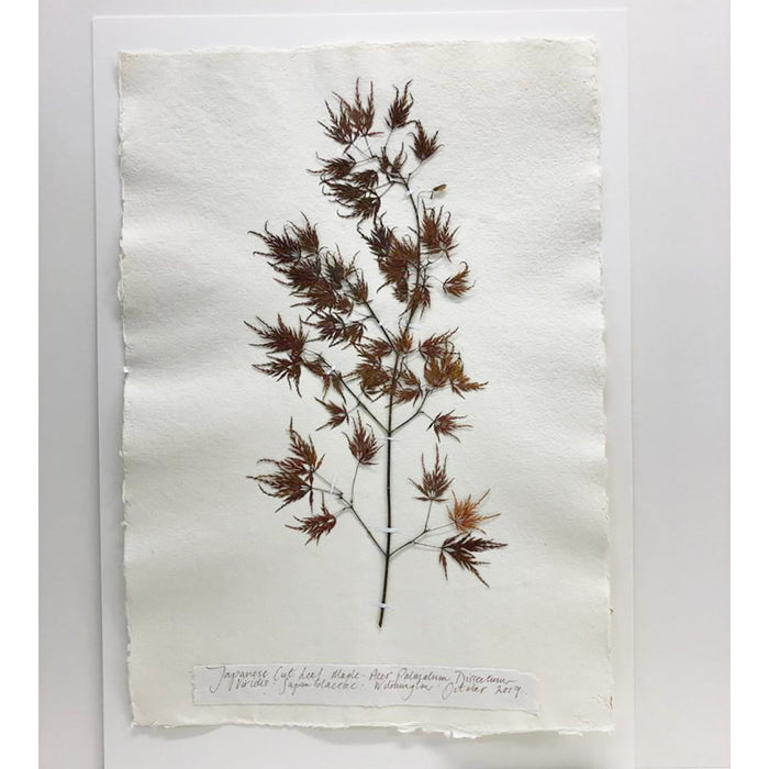 Pressed A2 Japanese Maple Original by Peta King