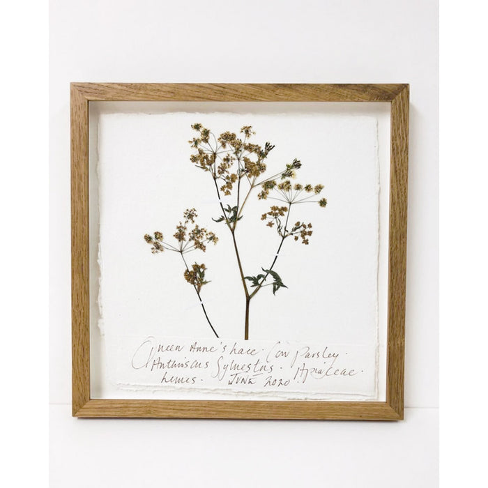 Queen Anne's Lace I Original by Peta King | 9 x 9 Pressing Framed