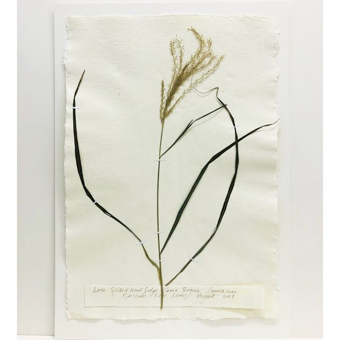 Pressed A2 Sedge Original by Peta King