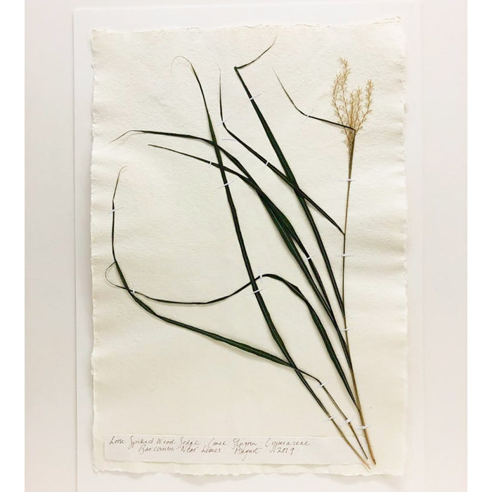 Pressed A2 Sedge IIII Original by Peta King