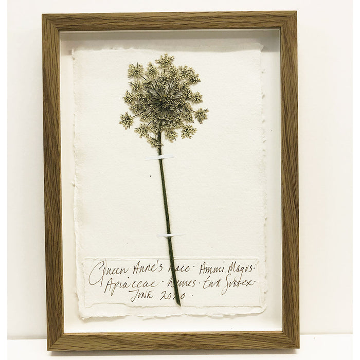 Queen Anne's Lace II Original by Peta King | A4 Pressing Framed
