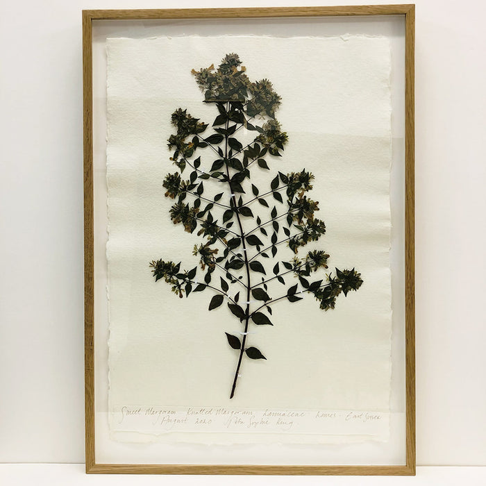 Framed A2 | Sweet Marjoram Original by Peta King