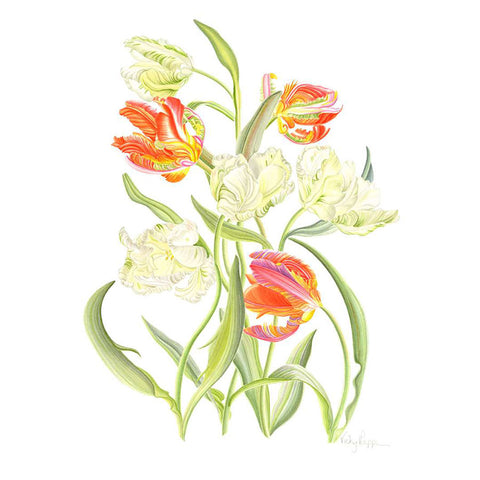 Parrot Tulips By Vicky Mappin