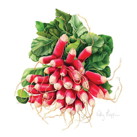 Radishes By Vicky Mappin