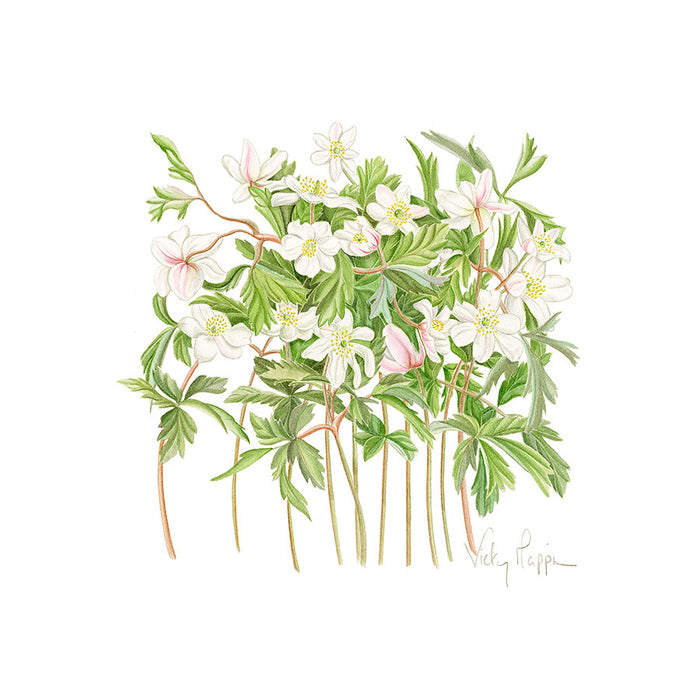 Wood Anemonies By Vicky Mappin