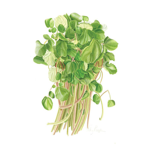 Watercress By Vicky Mappin