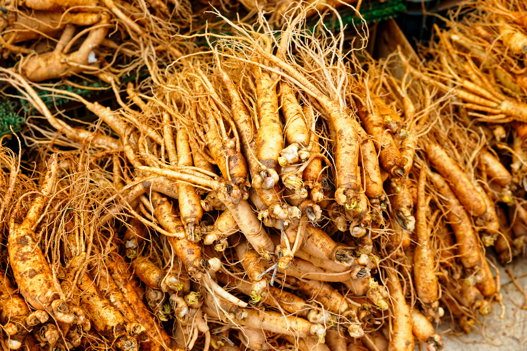 Most Effective Adaptogen - Panax Ginseng