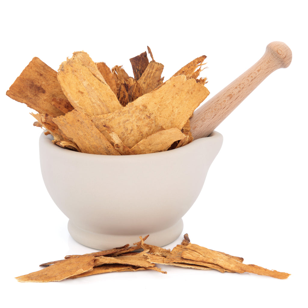 astragalus for longevity and aging