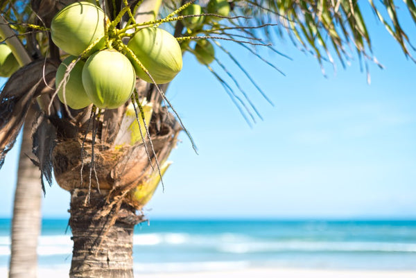 are coconuts healthy