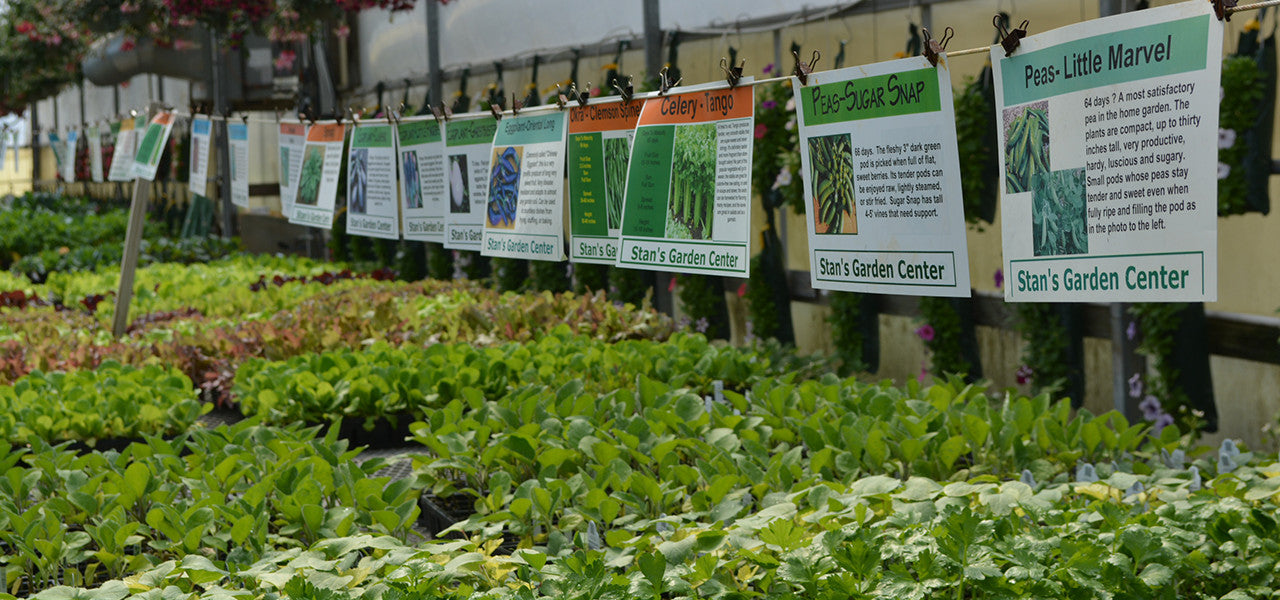 Annual Garden Plants - Stan's Garden Center in Erie, PA