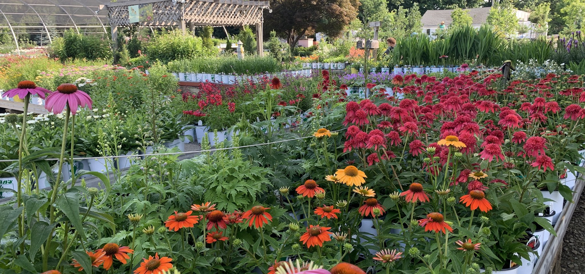 Beautiful Perennial Plants - Stan's Garden Center in Erie, PA