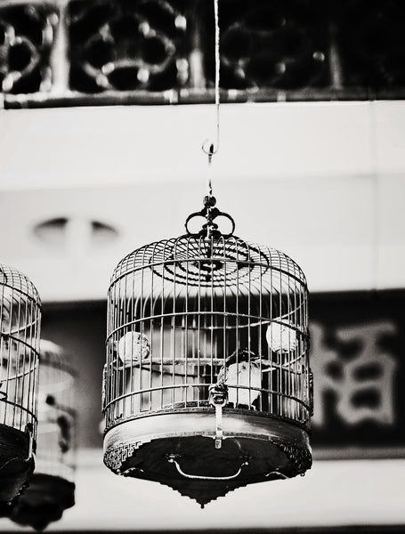 SooqCentral:Tram & Bird cage set of 2