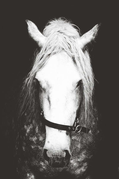 SooqCentral:Black and White Horse Print