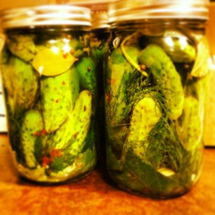 Organic_Kosher_Dill_Pickle_Recipe