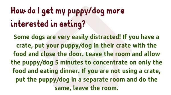 How-do-I-get-my-puppy-dog-to-eat-more-interested-in-eating?