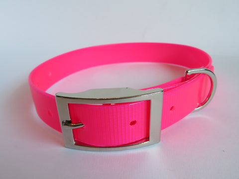 biothane collar-winter-dog walk-bright-light