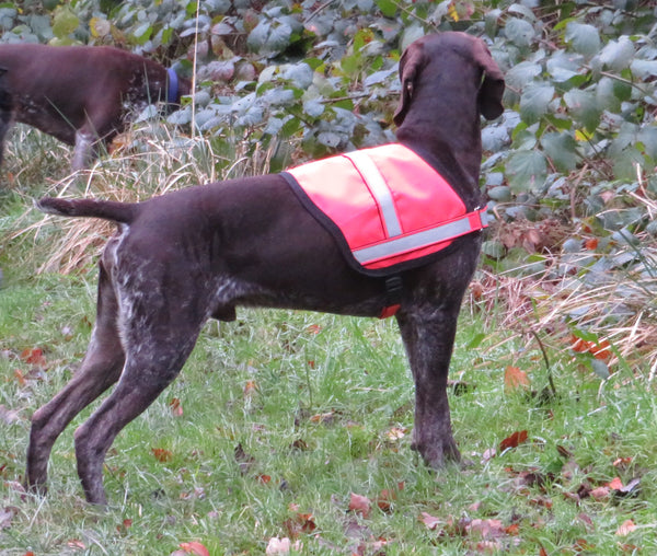 Hi Viz Vest-The Natural Dog Hub-The Natural Dog Hub