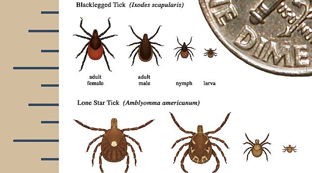 Ticks season is coming: They'll bug you this spring