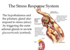 Understanding the Relationship Between Stress and Disease