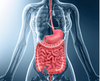 Digestive Health: The Gateway to Overall Wellbeing