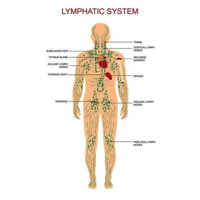 Lymphatic Drainage Ginger Massage Oil Oils