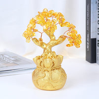 Season Of Abundance Bonsai Money Tree