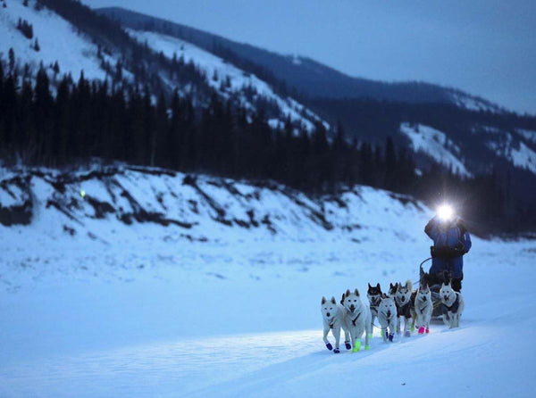 Sled Dog Racing