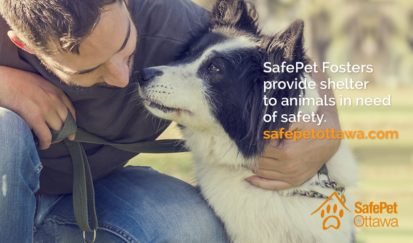 SafePet Ottawa - A network that supports abused women and their pets
