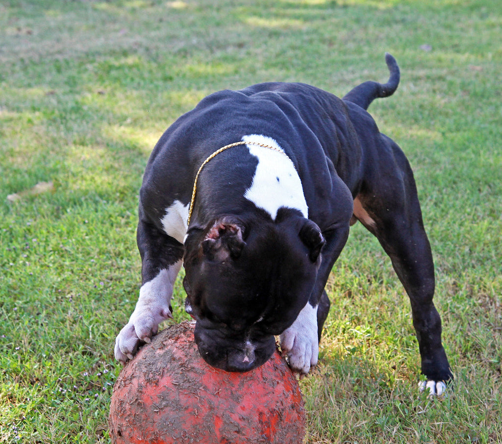 INDESTRUCTIBLE BALL- LARGE