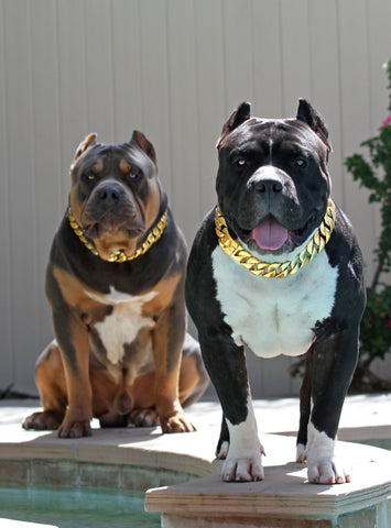 Choke Chains And Collars Leashes Swole Dogs