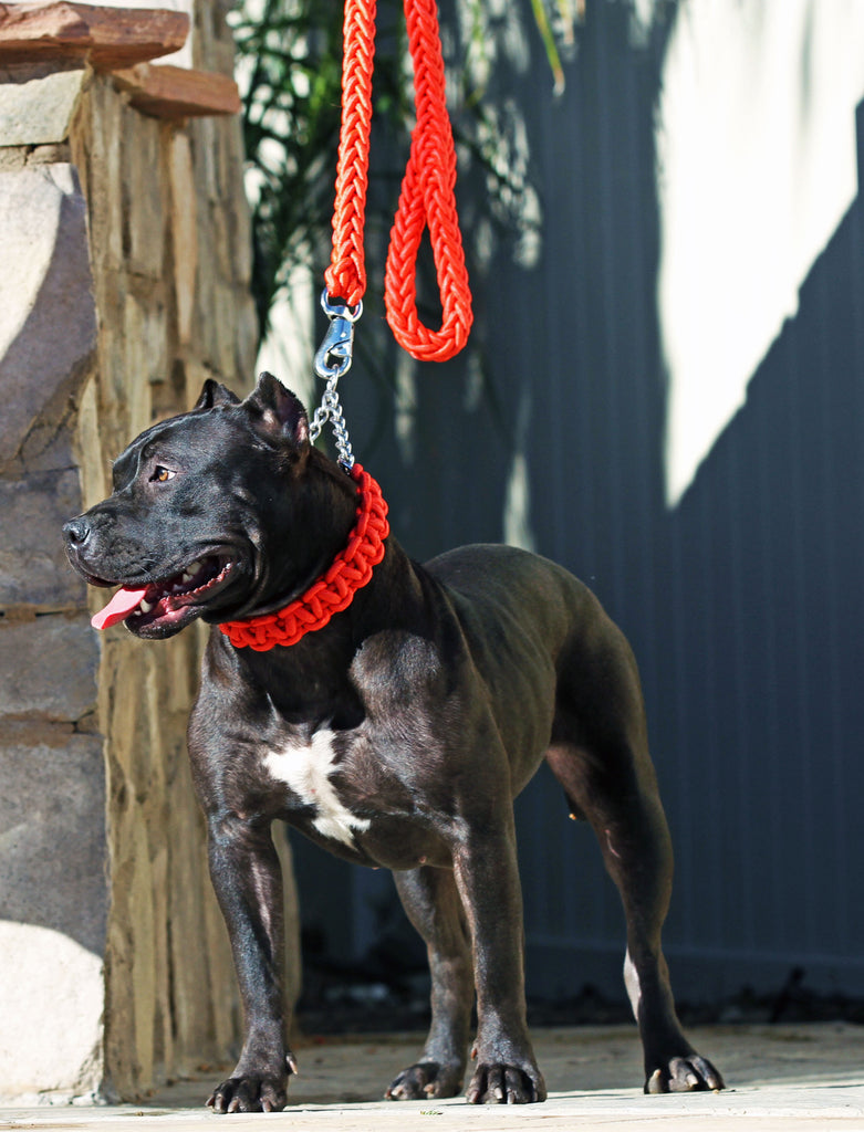 RED SHOWTIME COLLAR AND LEASH SET - ALL SIZES AVAILABLE