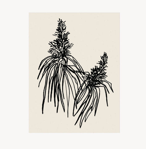 Botanical Art Print - Noir