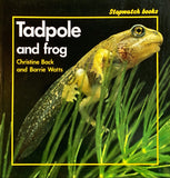 Stopwatch : Tadpole And Frog