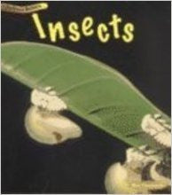 Big Book Animal Babies Insects