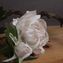 Load image into Gallery viewer, PLANTS - Grey Spray Rose Peony X3