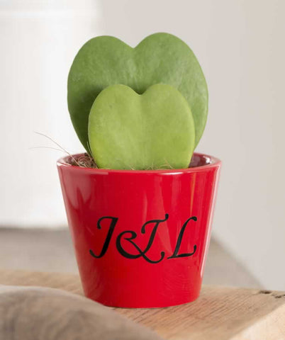 valentines gift ideas personalised plant