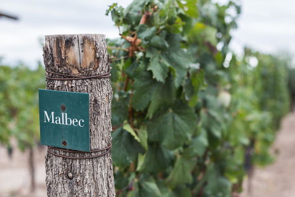 Malbec Wine: Behind The Scenes