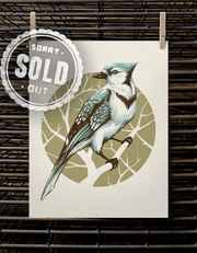 Bird Series | Blue Jay