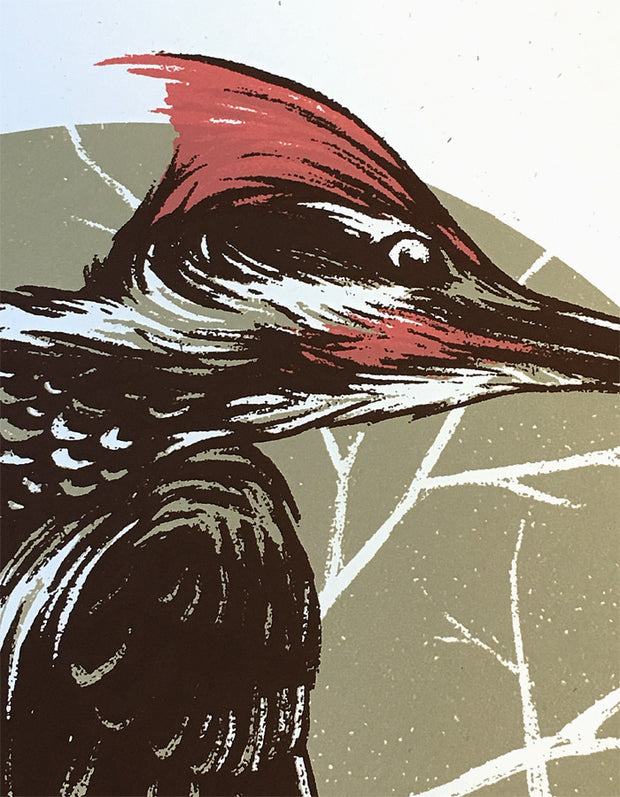 Bird Series | Woodpecker