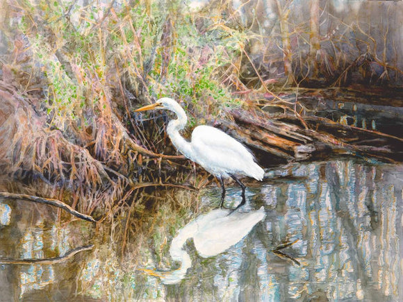 Egret in a Mangrove Swamp