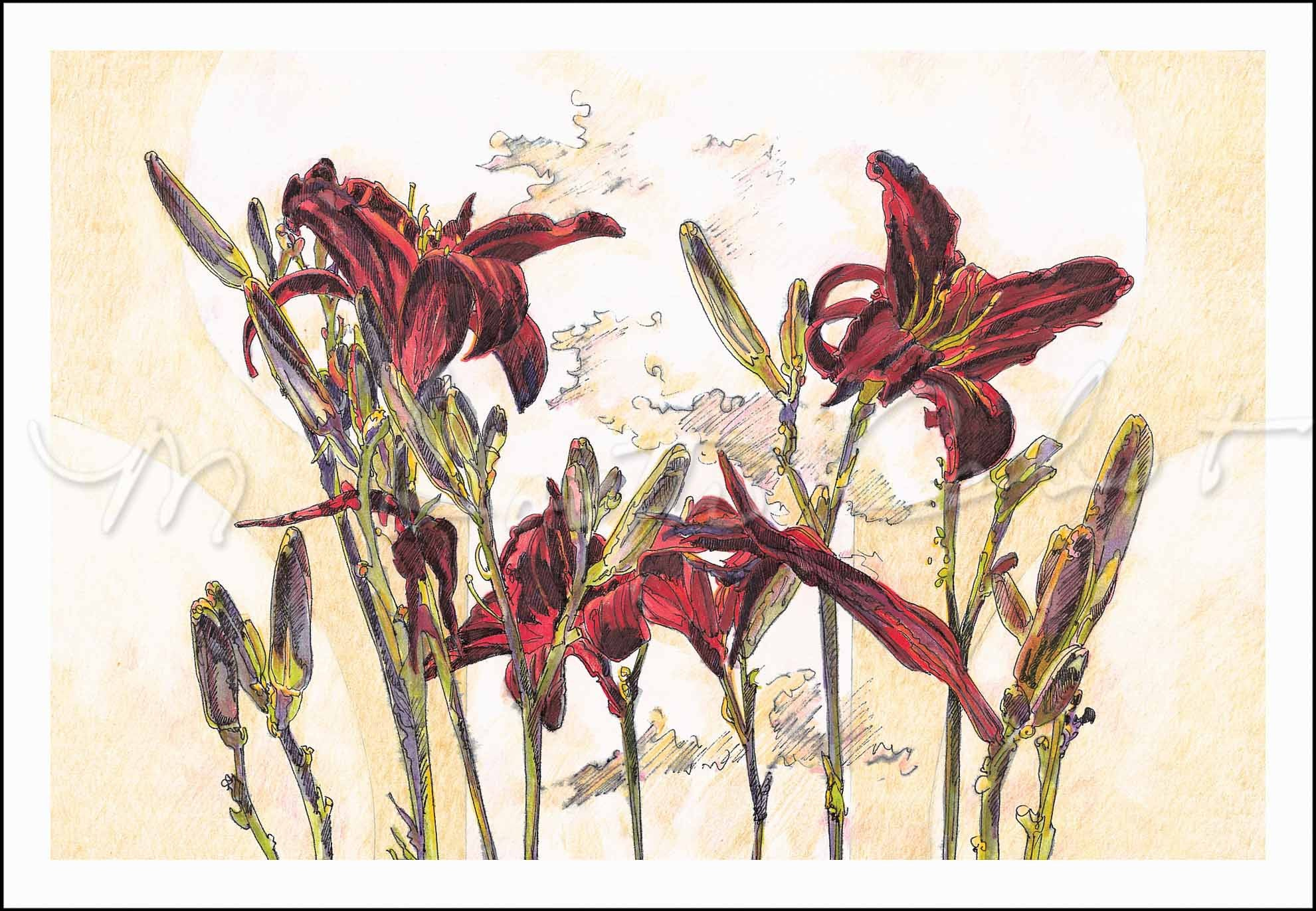 Lily - Almost Black Daylilies - Colored Pencil & Ink