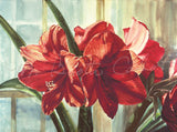 Amaryllis Through the Window - Watercolor Painting