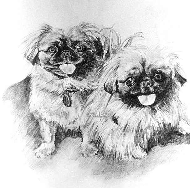 Pekingese - Pencil Drawing Commission