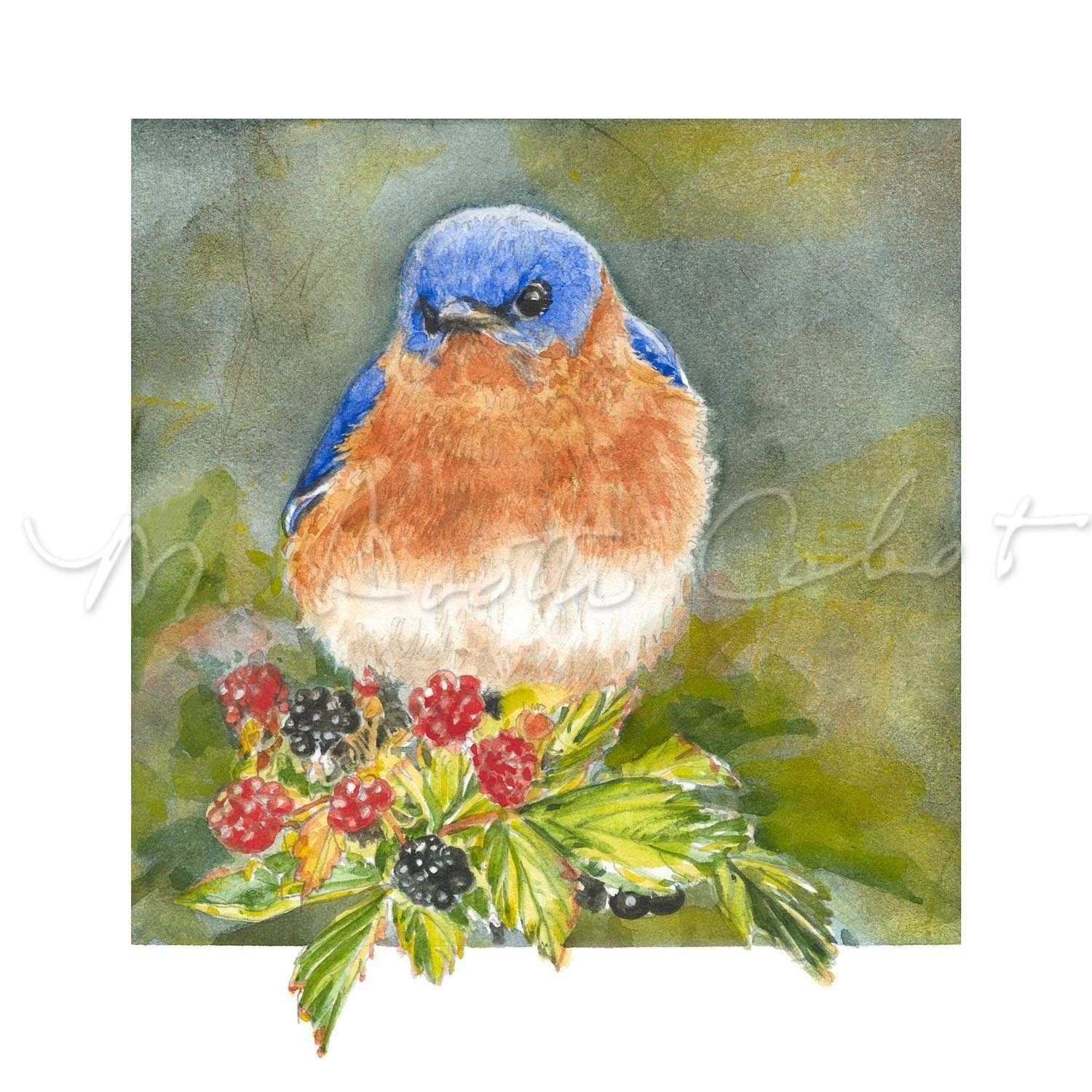 Bird - Bluebird Treat - Watercolor