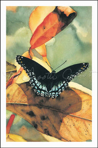 Butterfly - Red Spotted Purple - Watercolor