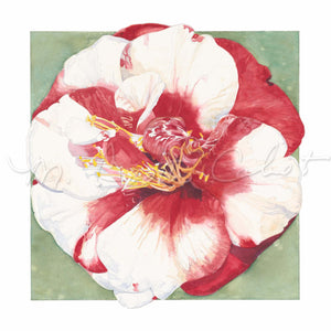 "Camellia ""Dr. Louis Shelton-Variegated"" - Watercolor"